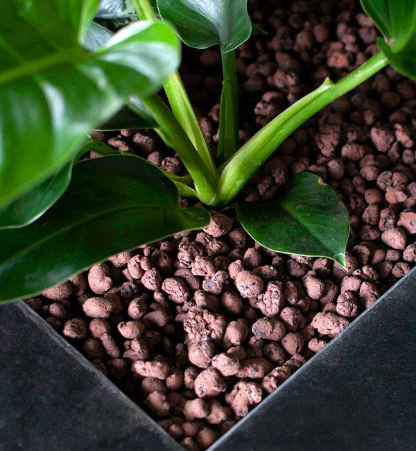 Graniglia piante idrocoltura